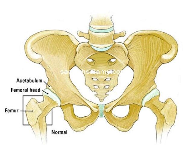 آناتومي مفصل ران